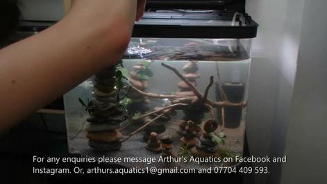 Need Help Starting an Aquarium or Aquasc