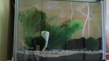 12 Litre Amano Shrimp Tank .mp4