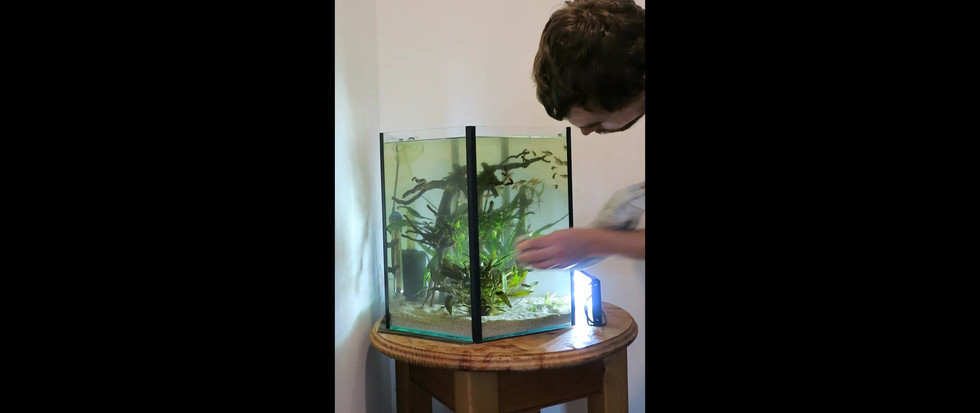 Cleaning Flame Tetra Tank .mp4