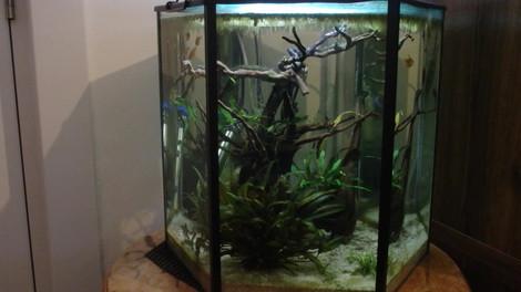 Maintaining A Planted Aquarium .mp4