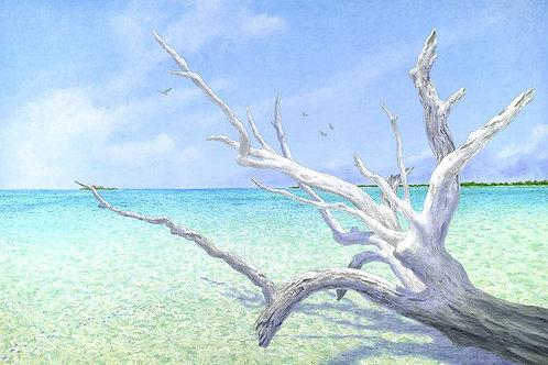 Faraway Cay