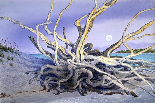 Driftwood Medusa