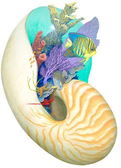 Nautilus Fantasea