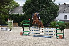 chevaux jumping à vendre
