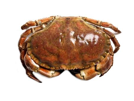 Krabbe i 28 dagersdietten