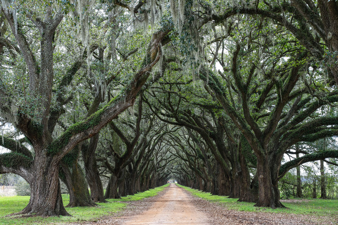 Tree Alley, Wallace, Louisiana - USA