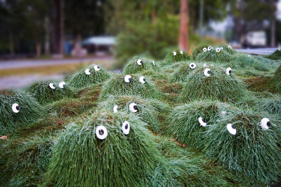 Plant People, Landsborough - QLD