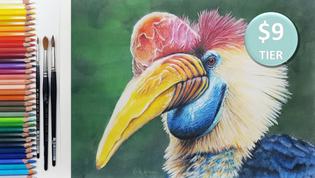 Hornbill in Watercolour Pencils
