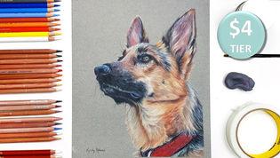 German Shepherd in Coloured Pencil