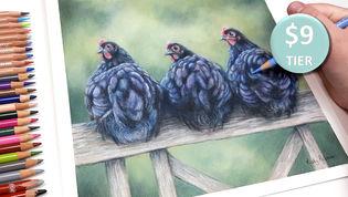 Chickens in Coloured Pencil