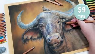 Buffalo in Pastels