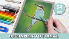 Bee-Eater in Pastel Pencils