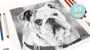 Bulldog in Charcoal