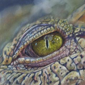 Crocodile Eye Study