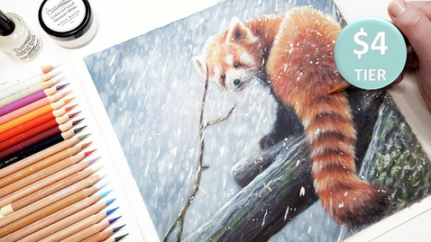 Red Panda in Coloured Pencil