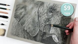 Elephant in Graphite