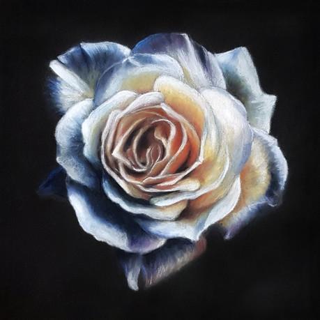 Rose no signature.jpg