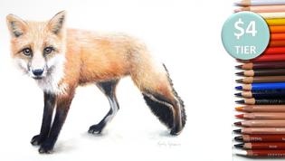 Fox in Coloured Pencil