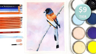 Rufous Treepie in Pan Pastel and Coloured Pencil