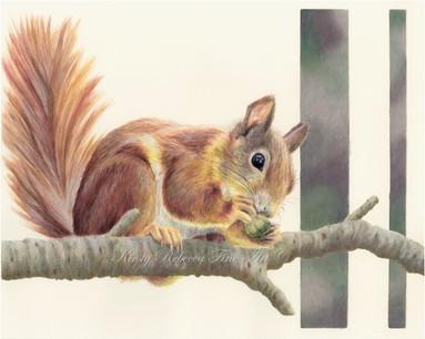 Squirrel New Watermark.jpg