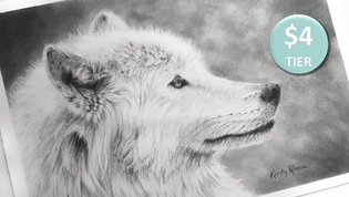 Wolf in Graphite