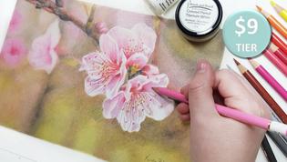 Blossoms in Coloured Pencil