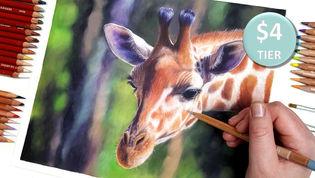 Giraffe in Coloured Pencil