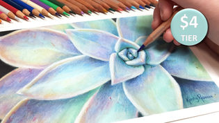 Succulent in Coloured Pencil