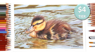 Duckling in Coloured Pencil