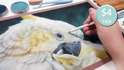 Cockatoo in Pastels