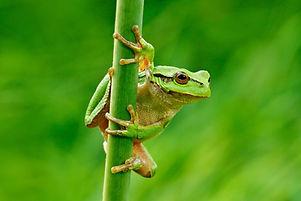 frog-1024x683.jpeg