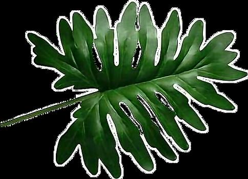 425-4253077_folhas-sticker-hoja-de-plant