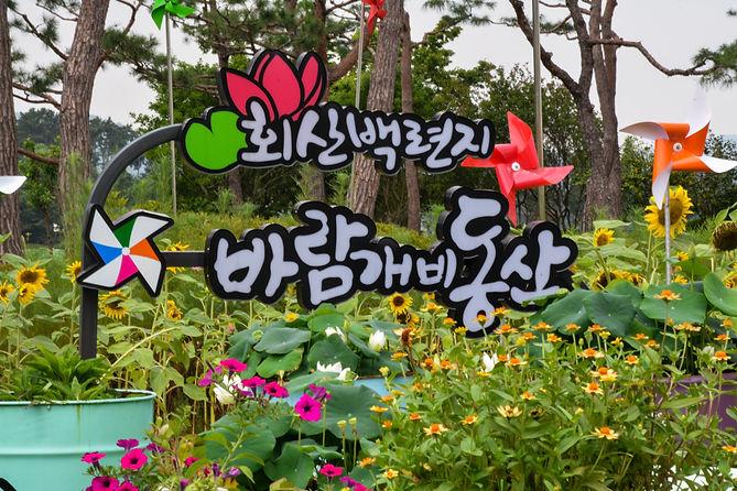 Muan White Lotus Festival pinwheel sunflowers