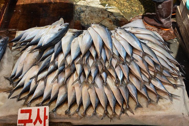 Stalled out fish Jagalchi Busan