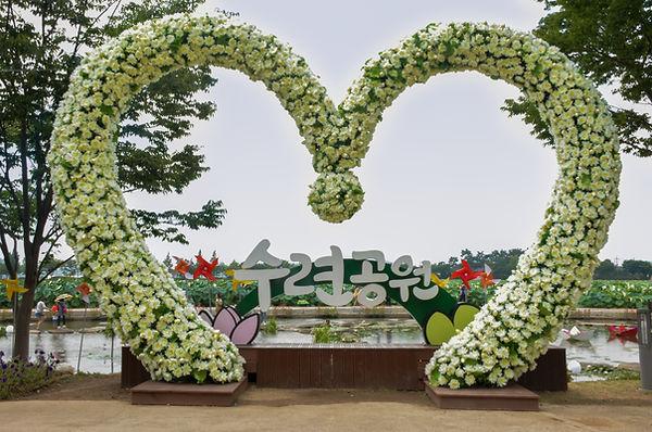Muan White Lotus Festival Jeollanam