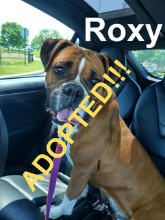 Roxy was adopted!