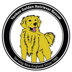 Yankee Golden Retriever Rescue