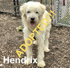 Hendrix was adopted!