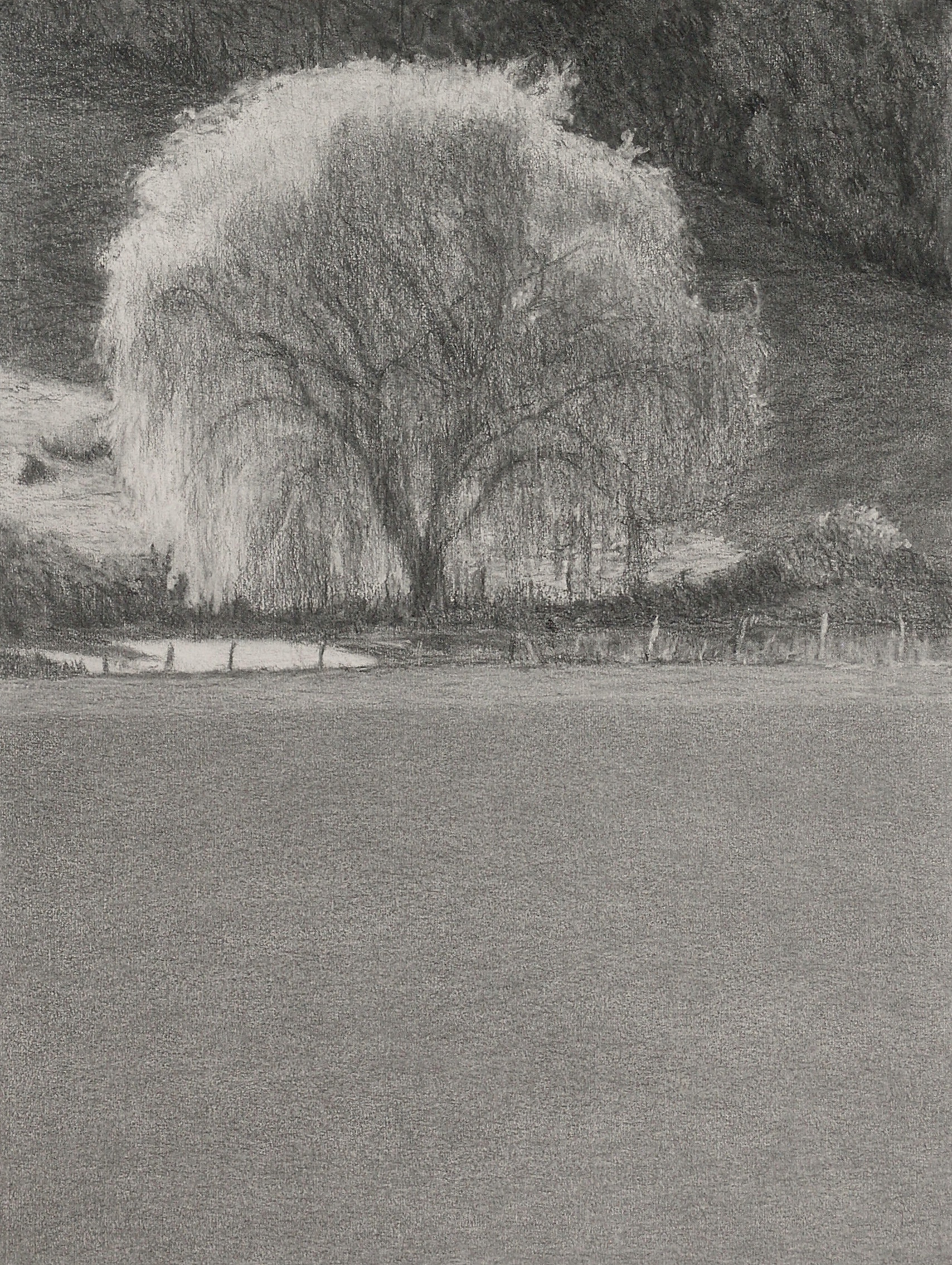 Autumn willow 2