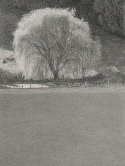 Autumn willow 2