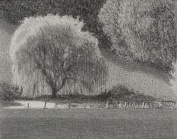 Autumn willow 1
