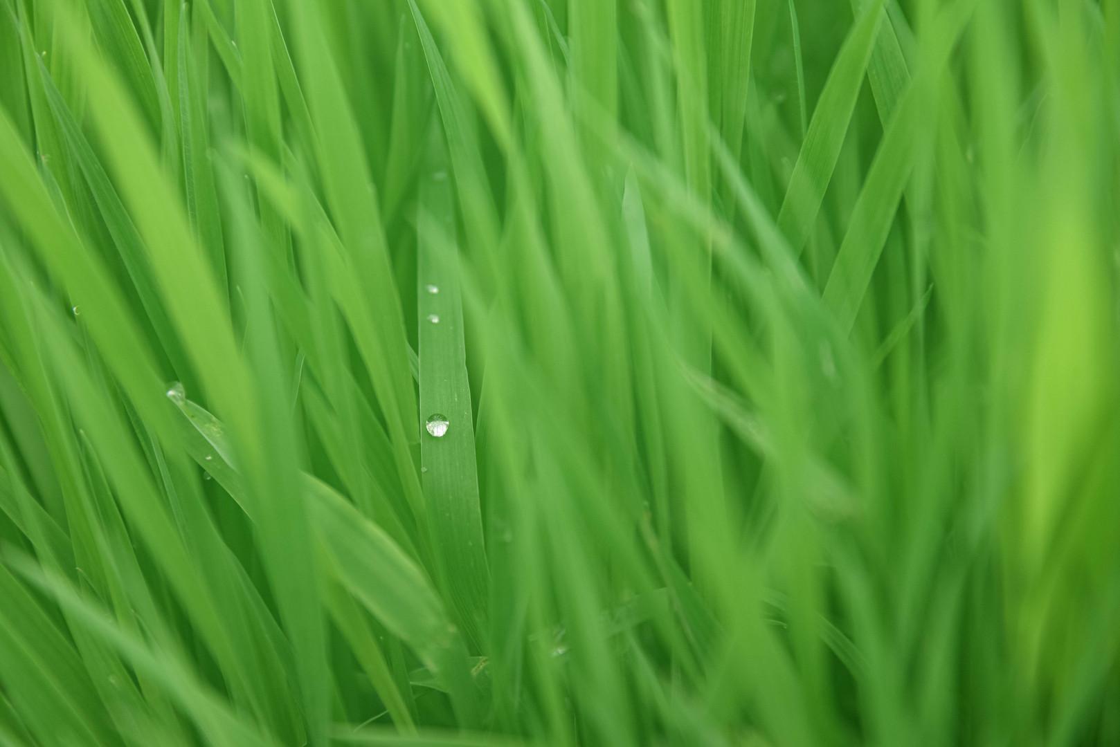 A drop in Nature