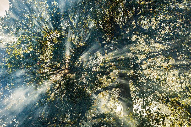 Smoke and tree Yellow - 1500.jpg