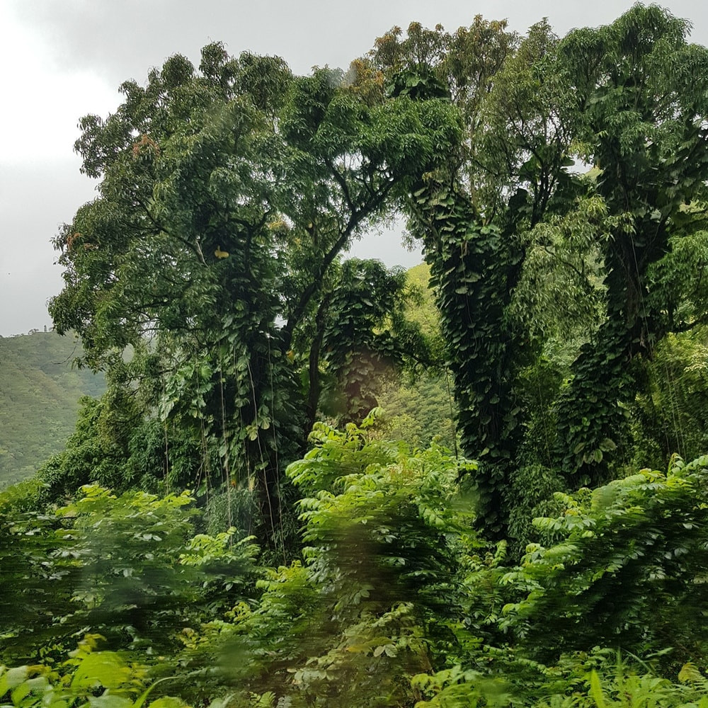 The road to Hana, Maui, Hawaii