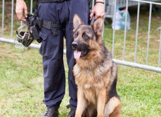 Premier Wants Sniffer Dogs in Schools