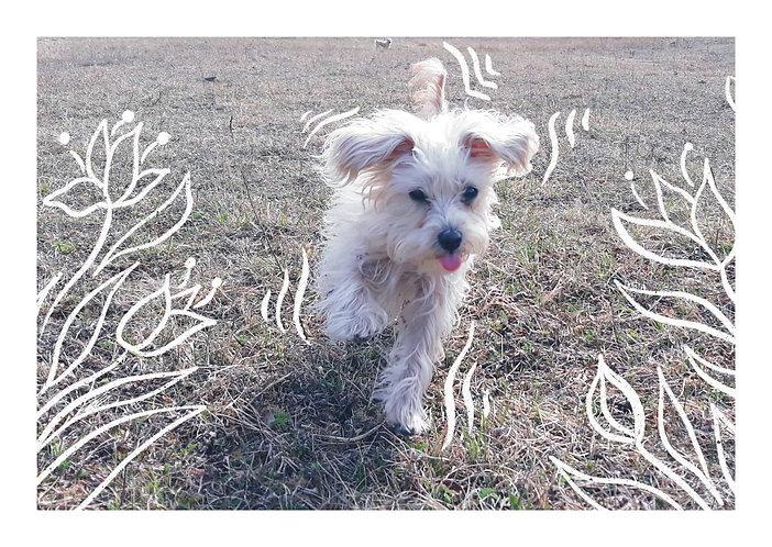Rescued Cute Dog Postcard