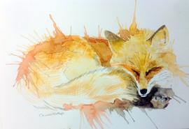 538-Fox Kip