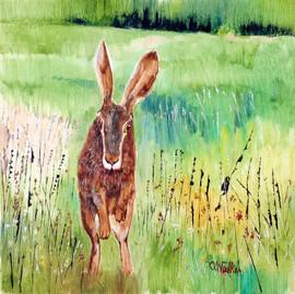 551-Hare