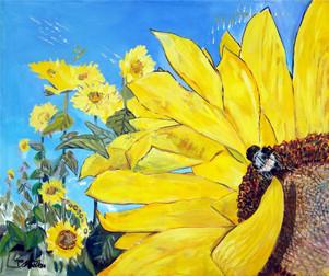 639-Sunflower - le Tournesol