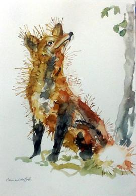 537-Fox-Up